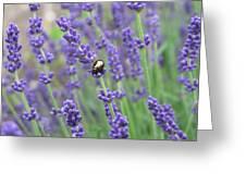 Lavender Beetle Greeting Card