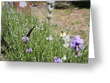 Lavender Butterflies Greeting Card