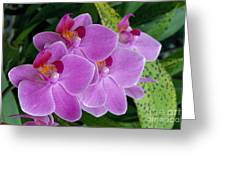 Lavender Colored Orchids Greeting Card