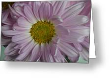 Lavender Daisy Greeting Card