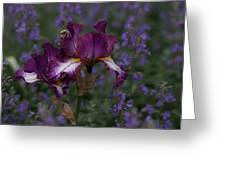 Lavender Field Greeting Card