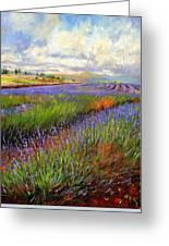 Lavender Field Greeting Card by David Stribbling