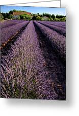 Lavender Field Provence France Greeting Card