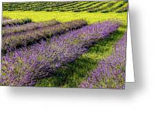 Lavender Fields Forever Greeting Card by Kendall McKernon