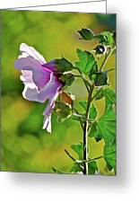 Lavender Flower In The Sun Greeting Card