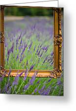 Lavender Frame Greeting Card