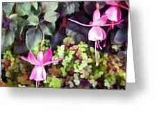 Lavender Fuchsias Just Hanging Around The Garden Greeting Card