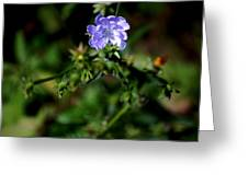 Lavender Hue Greeting Card