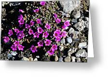 Lavender In The Rocks Greeting Card
