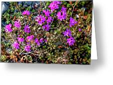 Lavender In The Wild Greeting Card