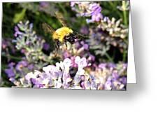 Lavender Landing Greeting Card