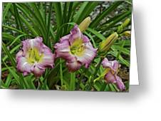 Lavender Lily Triad Greeting Card