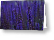 Lavender Night Greeting Card