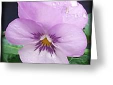 Lavender Pansy And Rain Greeting Card by Eva Thomas