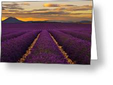 Lavender Provence Greeting Card