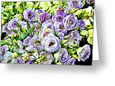 Lavender Ranunculus  Greeting Card
