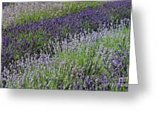Lavender Sea Greeting Card