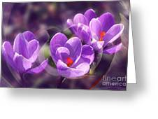 Lavender Spring Greeting Card