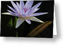 Lavender Tropical Water Lily Greeting Card