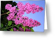 Lavish Lilacs Greeting Card