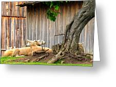 Lawnmowers At Rest Greeting Card