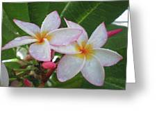 Lay Garden Greeting Card
