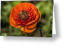 Layered Beauty Greeting Card