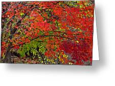 Layers Greeting Card by Ed Smith