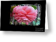 Layers Of Pink Camellia Dream Greeting Card