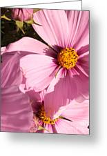 Layers Of Pink Cosmos Greeting Card
