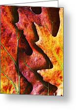 Layers Of Shades Of Autumn Greeting Card