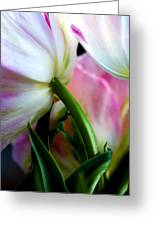 Layers Of Tulips Greeting Card by Marilyn Hunt