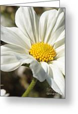 Layers Of White Cosmos Greeting Card