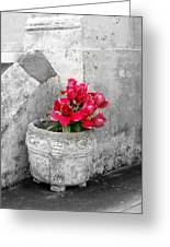 Layfayette No One Red Roses Greeting Card