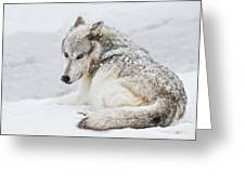 Laying Out In A Winter Storm II Greeting Card