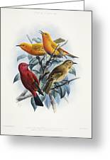 Laysan Honeycreeper Greeting Card
