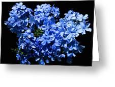 Lazy Blue Dazes Greeting Card