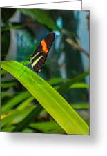 Lazy Butterfly Greeting Card