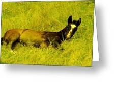 Lazy Colt Greeting Card