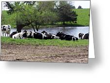 Lazy Cows Greeting Card