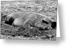 Lazy Hog Greeting Card