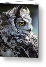 Lazy Owl Greeting Card