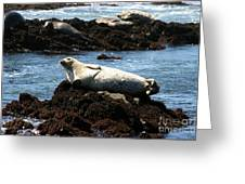 Lazy Seal Greeting Card
