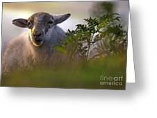 Lazy Sunny Afternoon Greeting Card