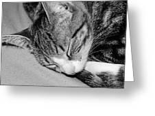 Lea Sleepy Cat Greeting Card