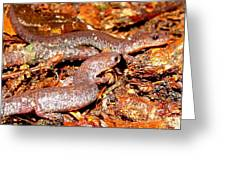 Leadback Salamander Pair Greeting Card