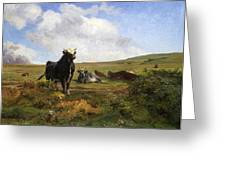 Leader Of The Herd Greeting Card