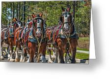 Leading The Way-budweiser Clydesdales Greeting Card