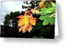 Leading The Way Into Fall Greeting Card
