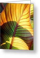 Leaf 1 Greeting Card
